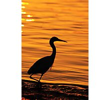 morning glow Photographic Print