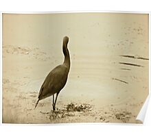 Little Heron on the Hunt Poster