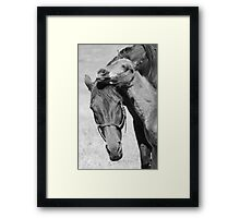 Mare & foal Framed Print