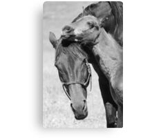 Mare & foal Canvas Print