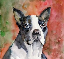 French  bulldog - Vodka by faruk koksal