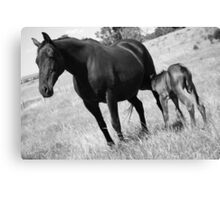 The old mare & her Filly Canvas Print