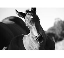 the filly Photographic Print