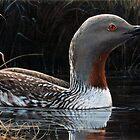 """""""RED THROATED LOON"""" by Robin Edward Thorne Murray,AFC"""