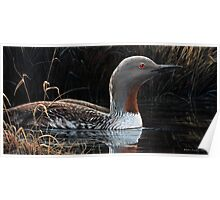 """RED THROATED LOON"" Poster"