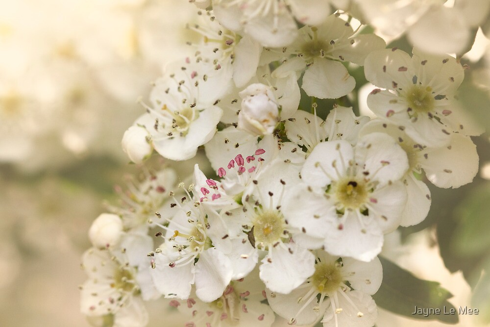 The Sweet Days of Spring by Jayne Le Mee