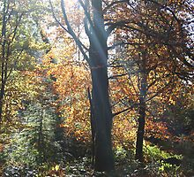 Autumn by mousesuzy