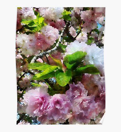 Double Cherry Blossoms Poster