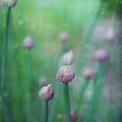 chives by Iris Lehnhardt