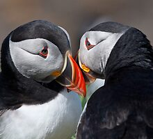 Eye to eye contact! by Shaun Whiteman