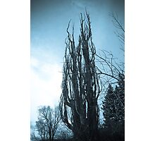The Devil's Tree Photographic Print
