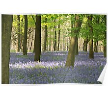 This year's Bluebells Poster