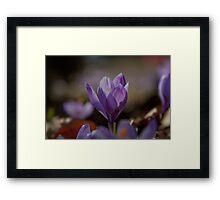 flower pedals in spring Framed Print