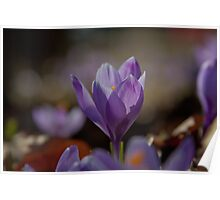 flower pedals in spring Poster
