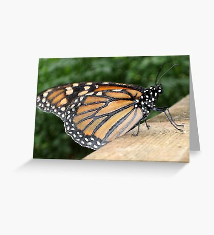 Closed Wings & Resting - Monarch Butterfly Greeting Card