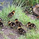 Baby Ducklings by JacquiK