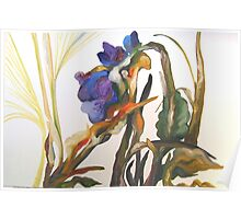 Bearded Iris, Big Sur Woods Poster