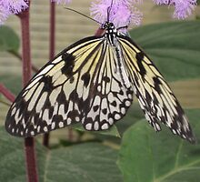 Hanging Paper Kite Butterfly by aneyefornature