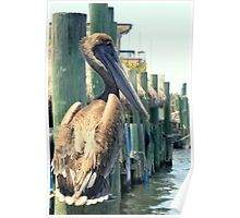 Pelican On A Post Poster