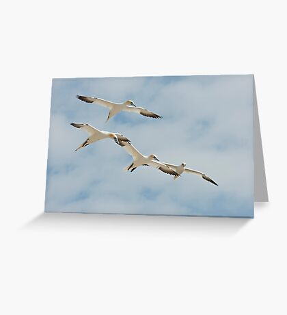 Let's join hands! Gannets, Saltee Island, County Wexford, Ireland Greeting Card