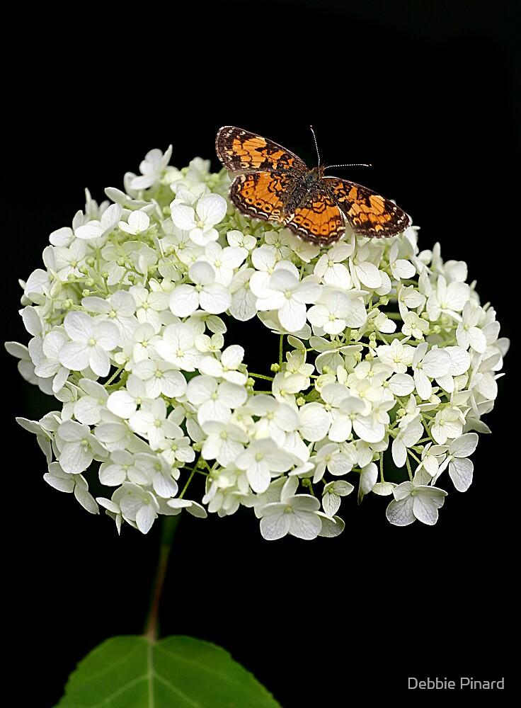 Monarch on a Hydrangea by Debbie Pinard