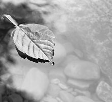 Black and White Floating Leaf by Carolyn Chentnik