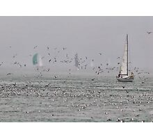 Sailing with birds Photographic Print