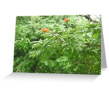 Radiant Red Flowers in tree Greeting Card