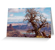 Twisted Juniper at Dead Horse Point, Utah Greeting Card