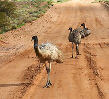 Emus ~ Outback Traffic Hazard by Robert Elliott