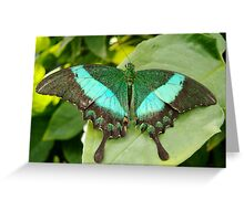 Sparkling Emerald Butterfly Greeting Card