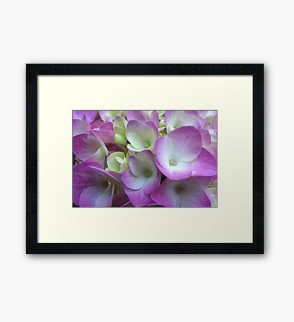 Nose to Nose with Hydrangea Framed Print