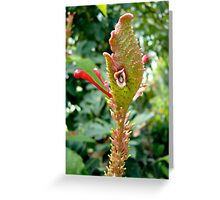Wild looking tropical flower Greeting Card