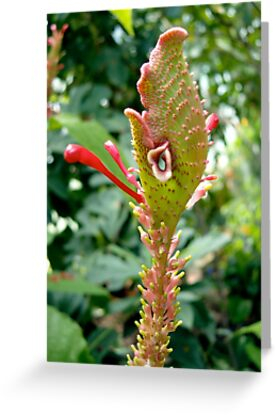 Wild looking tropical flower by Paula Betz