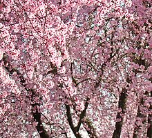 Spring Trees Pink Flower Blossoms art prints Baslee Troutman by BasleeArtPrints