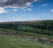 North Yorkshire Moors 1 by Mike-G