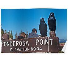 Ravens on Ponderosa Point Poster