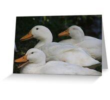 Pekin Ducks Greeting Card