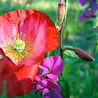 Poppy Love by Janice Dunbar