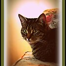 Sweet Whitney Kitty by AngieBanta