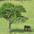 alone in the shadow of a mango tree by Sarah Stewart