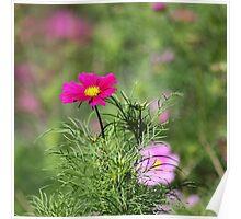 Winterbourne pink bokeh Poster