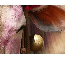 Holi Cow Photographic Print
