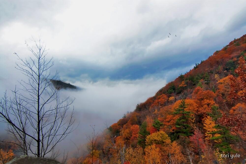 Hidden Mountain by tori yule