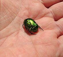 Even a Beetle needs a litttle comfort. by Heather Goodwin