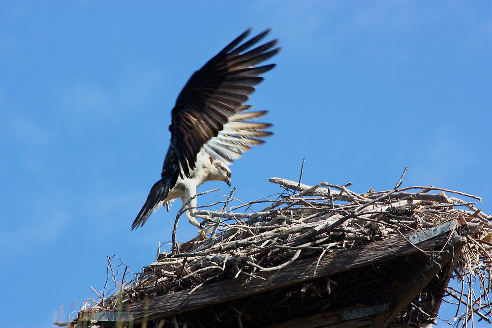 Perfect Landing by byronbackyard