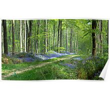 English countryside in spring Poster
