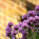 Chives against Brick by RKLazenby