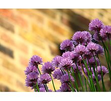 Chives against Brick Photographic Print