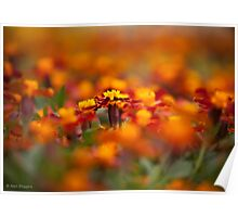 Marigolds for miles Poster